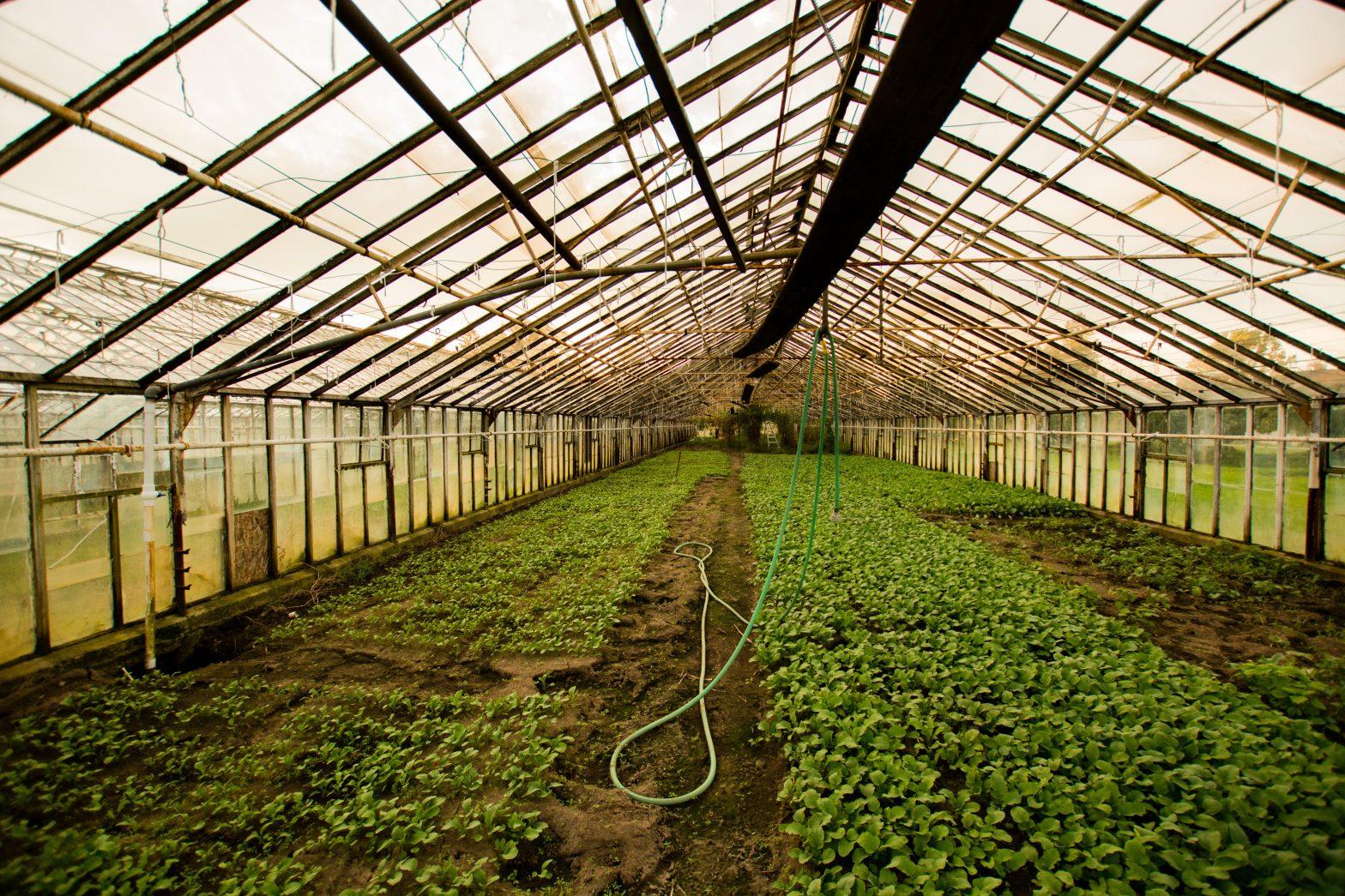 Sostegno temporaneo eccezionale a favore di agricoltori particolarmente colpiti dalla crisi in Veneto.