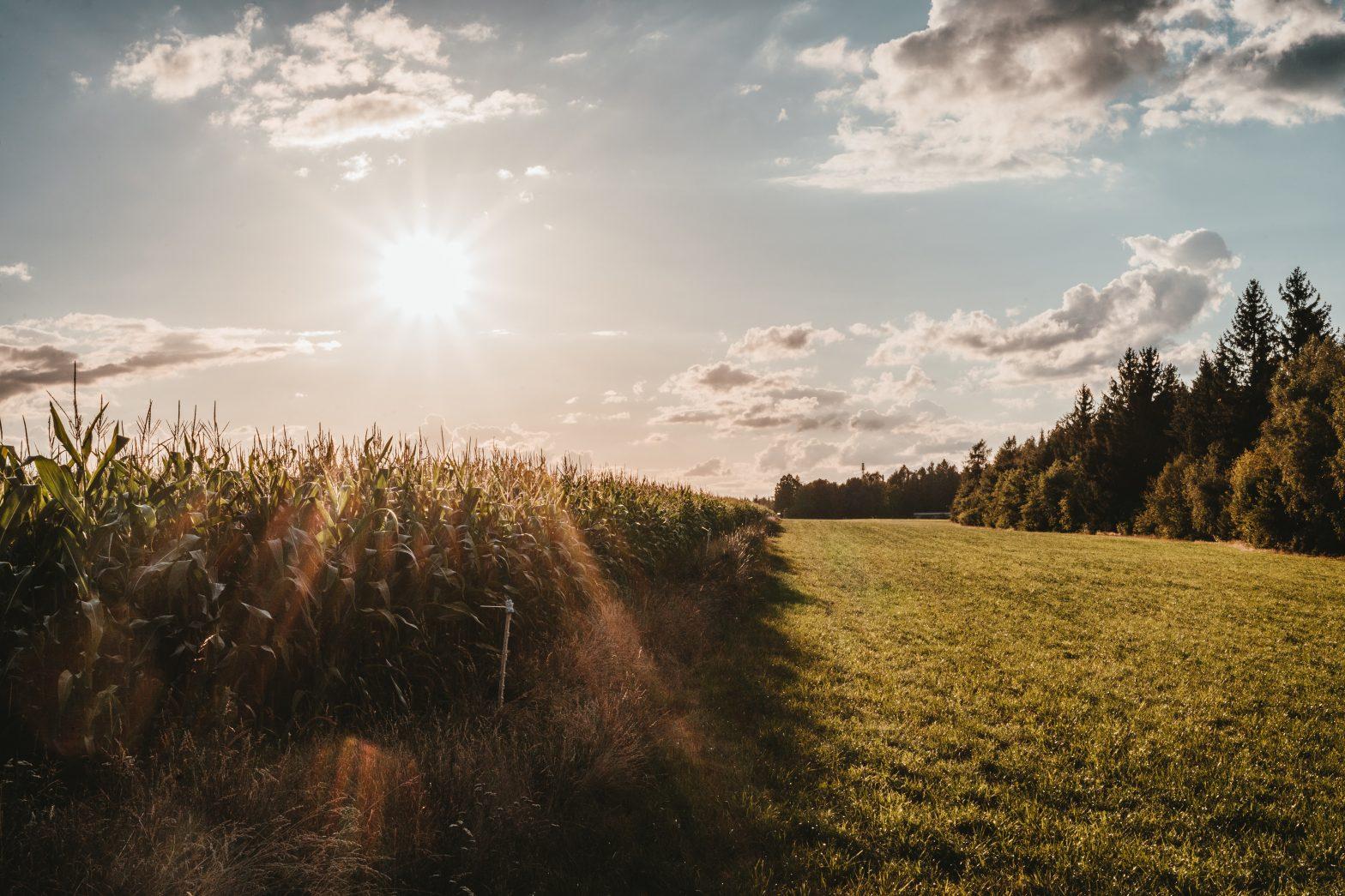 Agricoltura e Legge di bilancio 2021: proroghe, rifinanziamento fondi e qualche novità per le imprese agricole